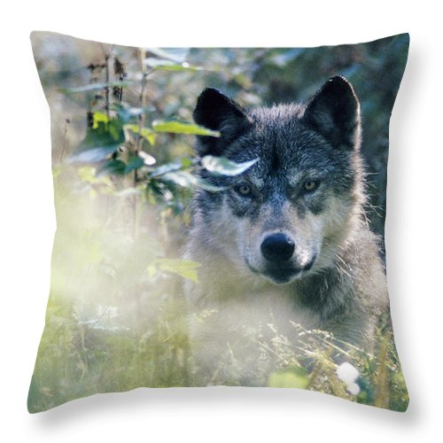 Wolf Throw Pillow featuring the photograph Wolf Stare by Steve Somerville