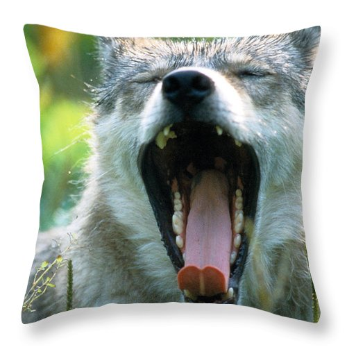 Wolf Throw Pillow featuring the photograph Wolf Yawn by Steve Somerville