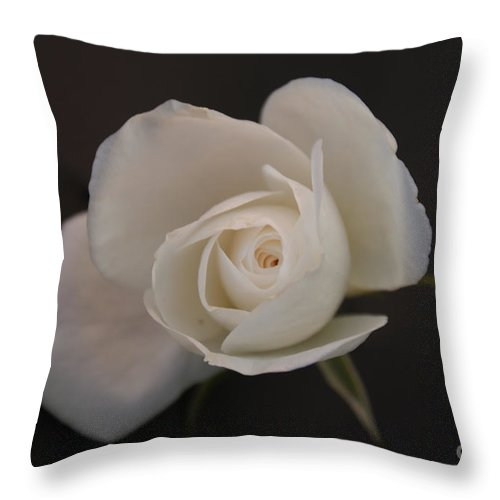 Rose Throw Pillow featuring the photograph Wonder by Shelley Jones