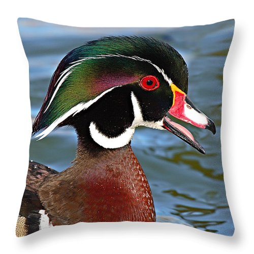 Wood Duck Throw Pillow featuring the photograph Wood Duck Drake Calling In Spring Courtship by Max Allen