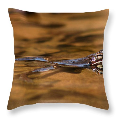 Frog Throw Pillow featuring the photograph Wood Frog Reflecting On Golden Pond by Max Allen