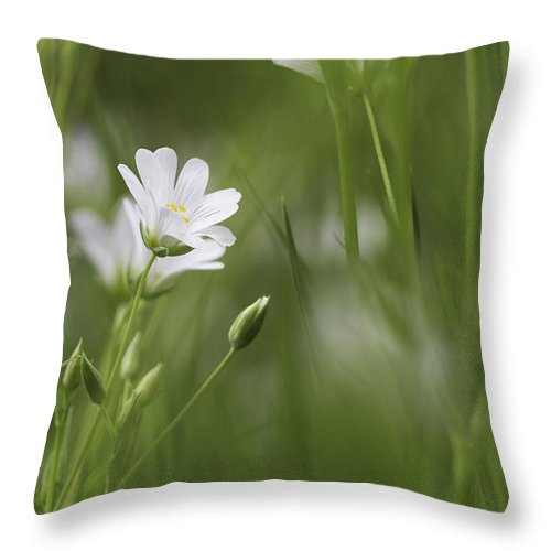 Flowers Throw Pillow featuring the photograph Woodland Flowers by Christine Lamont