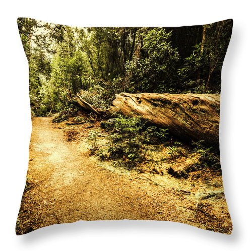 Log Throw Pillow featuring the photograph Woodland Nature Walk by Jorgo Photography - Wall Art Gallery