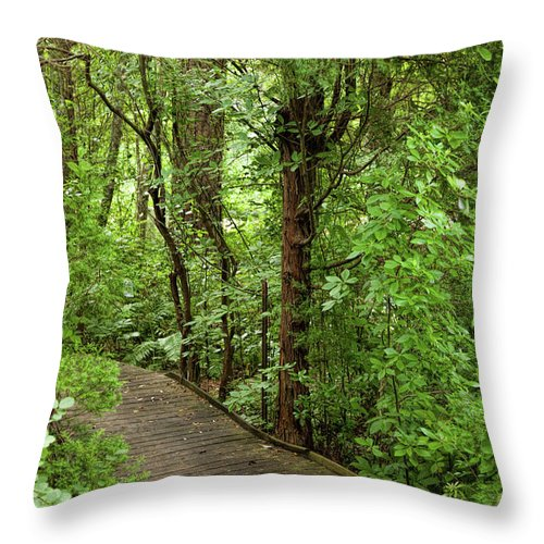 Woods Throw Pillow featuring the photograph Woodland Walk by Cynthia Frohlich