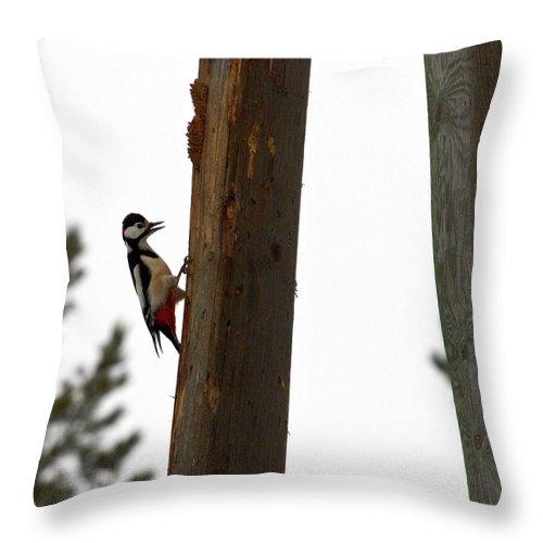 Lehtokukka Throw Pillow featuring the photograph Woodpecker Workshop by Jouko Lehto