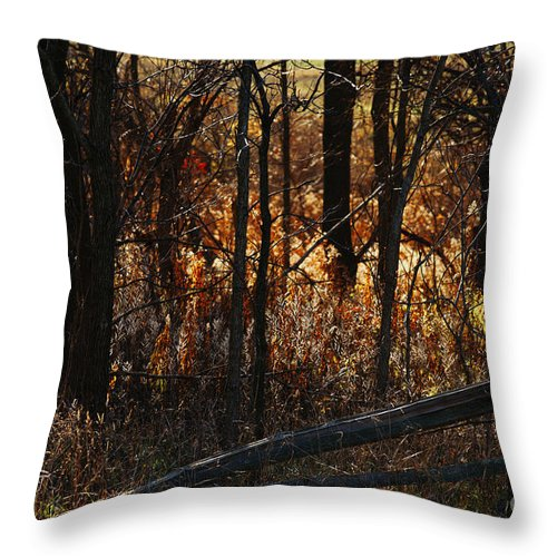 Michigan Throw Pillow featuring the photograph Woods - 1 by Linda Shafer