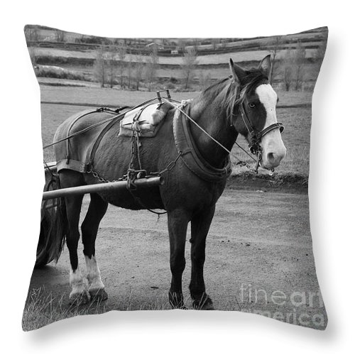 Cart Throw Pillow featuring the photograph Work Horse And Cart by Gaspar Avila