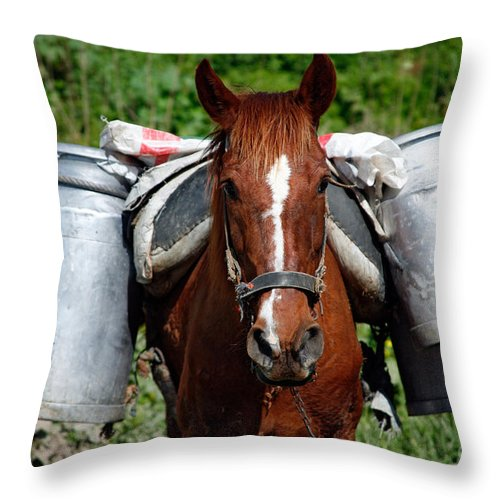 Countryside Throw Pillow featuring the photograph Work Horse At The Azores by Gaspar Avila