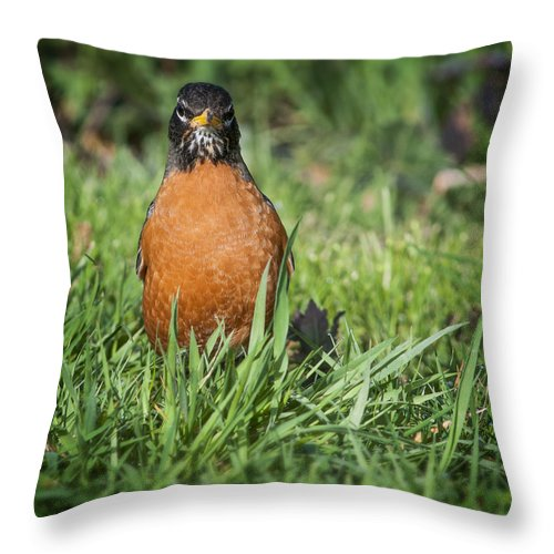 American Robin Throw Pillow featuring the photograph Worm's Eye View by Robert Potts