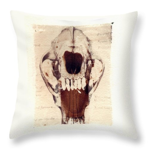 Polaroid Throw Pillow featuring the photograph X Ray Terrestrial by Jane Linders