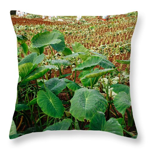 Agriculture Throw Pillow featuring the photograph Yams Farm In Azores by Gaspar Avila