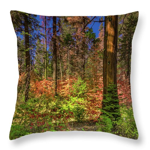 Landscape Throw Pillow featuring the pyrography Yosemite In The Fall by Javier Flores