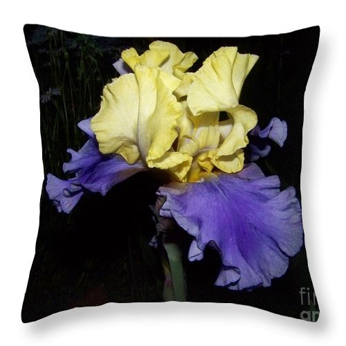 Iris Throw Pillow featuring the photograph Yellow And Blue Iris by Kathy McClure