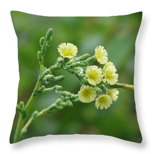 Green Yellow Flower Throw Pillow featuring the photograph Yellow And Small by Luciana Seymour