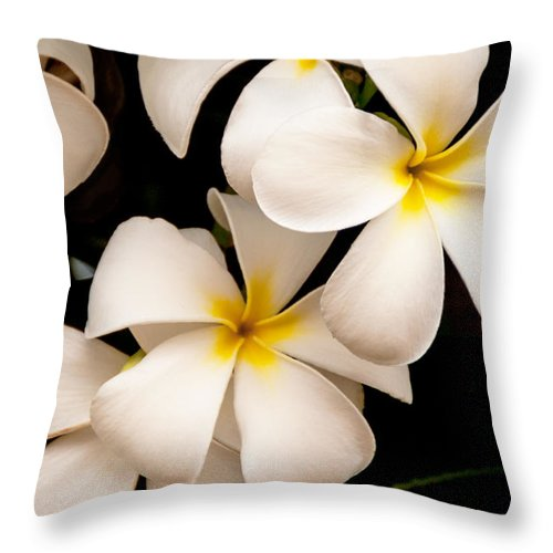 Yellow And White Plumeria Flower Frangipani Throw Pillow featuring the photograph Yellow And White Plumeria by Brian Harig