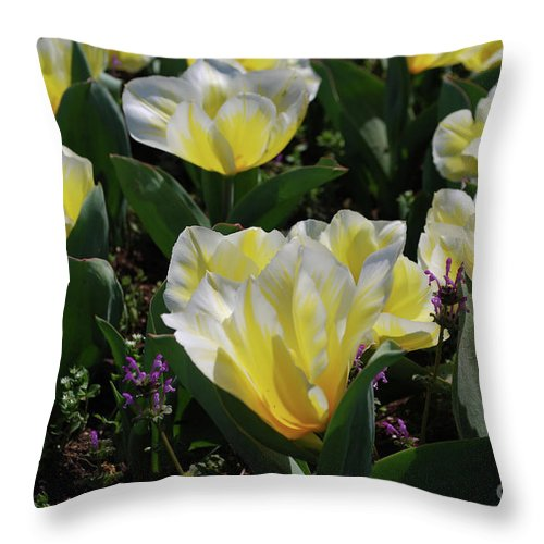Tulip Throw Pillow featuring the photograph Yellow And White Tulips Flowering In A Garden by DejaVu Designs