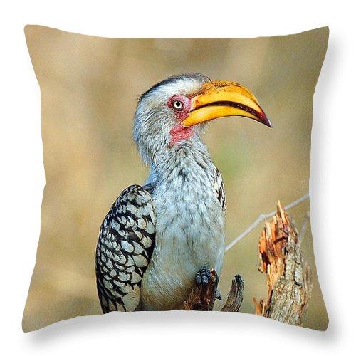 Hornbill Throw Pillow featuring the photograph Yellow-billed Hornbill by Stiaan Els