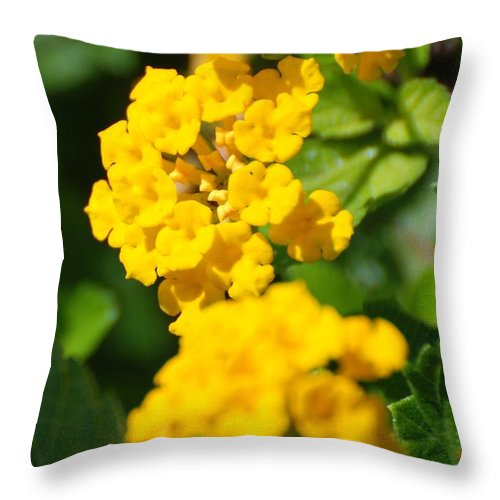 Flowers Throw Pillow featuring the photograph Yellow Blooms by Rob Hans