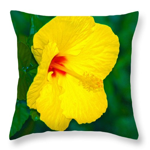 Flower Throw Pillow featuring the photograph Yellow Blossom by Athala Carole Bruckner