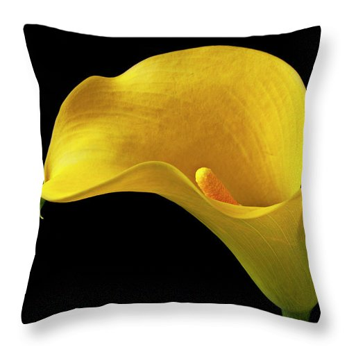Yellow Calla Lily Black White Vase Throw Pillow featuring the photograph Yellow Calla Lily In Black And White Vase by Garry Gay