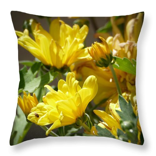 Flora Throw Pillow featuring the photograph Yellow Chrysanthemum by Laurel Powell
