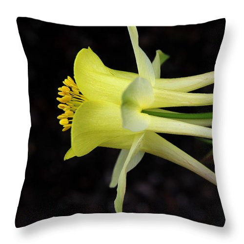 Aquilegia Throw Pillow featuring the photograph Yellow Columbine 2 by Judy Vincent