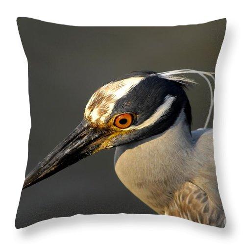 Yellow Crowned Night Heron Throw Pillow featuring the photograph Yellow Crowned Night Heron by David Lee Thompson