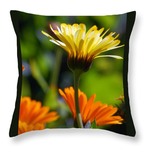 Daisy Throw Pillow featuring the photograph Yellow Daisy by Amy Fose