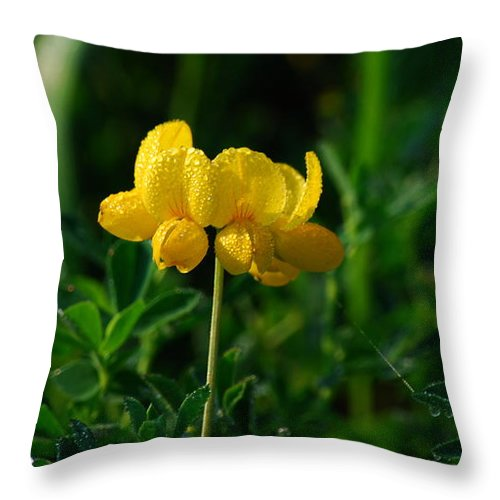 Birds Foot Trefoil Throw Pillow featuring the photograph Yellow Dew Drops by Michelle Hastings
