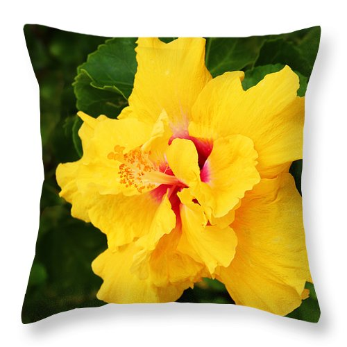 Yellow Double Hibiscus Throw Pillow For Sale By Kerri Ligatich