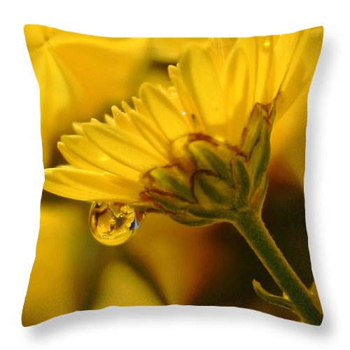 Flowers Throw Pillow featuring the photograph Yellow Drip by Linda Sannuti