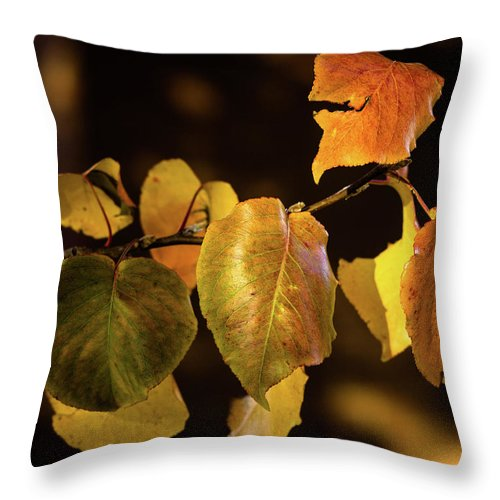 Throw Pillow featuring the photograph Yellow Fall Leaves by Rod Lindley