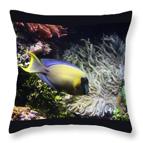Fish Throw Pillow featuring the photograph Yellow Fish by Kenna Westerman