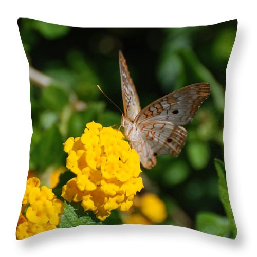 Butterfly Throw Pillow featuring the photograph Yellow Flower Brown Fly by Rob Hans