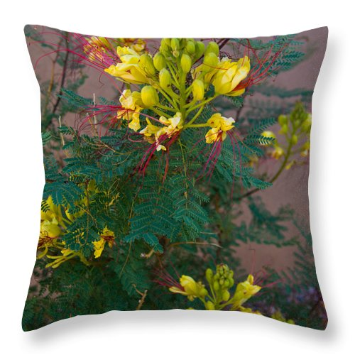 Throw Pillow featuring the photograph Yellow Flower by James Gay