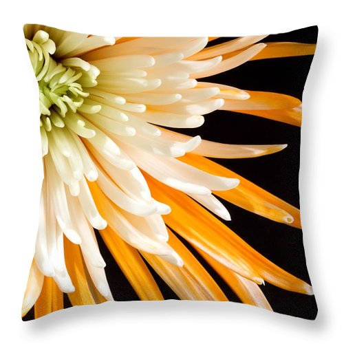 Flower Throw Pillow featuring the photograph Yellow Flower On Black by Al Mueller