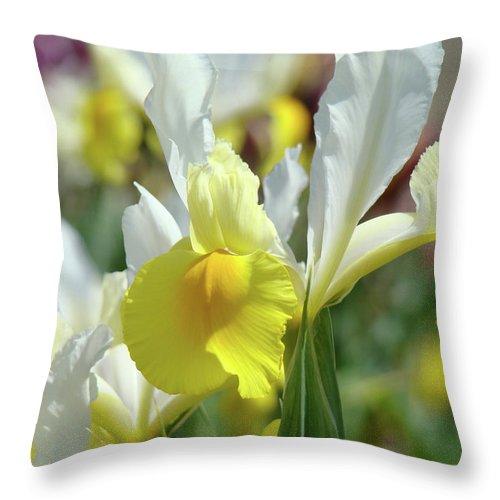 �irises Artwork� Throw Pillow featuring the photograph Yellow Irises Flowers Iris Flower Art Print Floral Botanical Art Baslee Troutman by Baslee Troutman