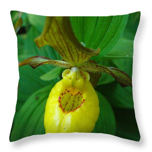 Yellow Lady Slipper Throw Pillow featuring the photograph Yellow Lady's Slipper by Peggy King