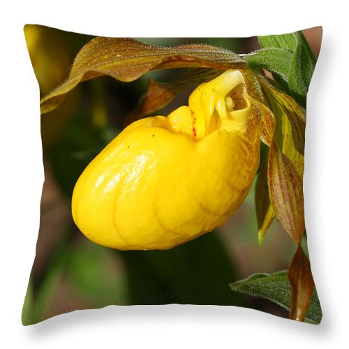 Flower Throw Pillow featuring the photograph Yellow Lady's Slipper by Teresa Zieba