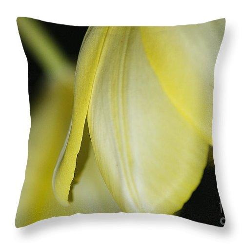 Tulip Throw Pillow featuring the photograph Yellow Petals by Deborah Benoit