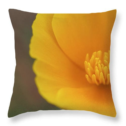 Yellow Throw Pillow featuring the photograph Yellow Poppy by Graham Elliott