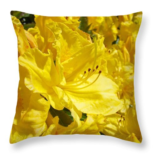 Rhodies Throw Pillow featuring the photograph Yellow Rhodies Floral Brilliant Sunny Rhododendrons Baslee Troutman by Baslee Troutman
