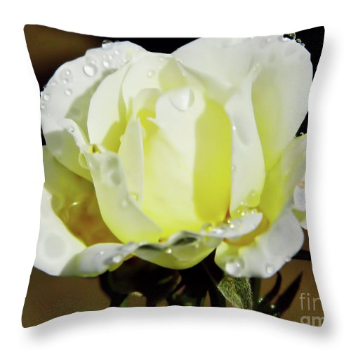 Roses Throw Pillow featuring the photograph Yellow Rose Dew Drops by D Hackett