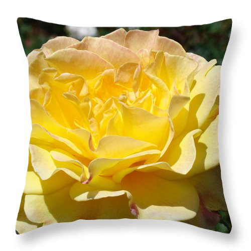 Rose Throw Pillow featuring the photograph Yellow Rose Sunlit Summer Roses Flowers Art Prints Baslee Troutman by Baslee Troutman