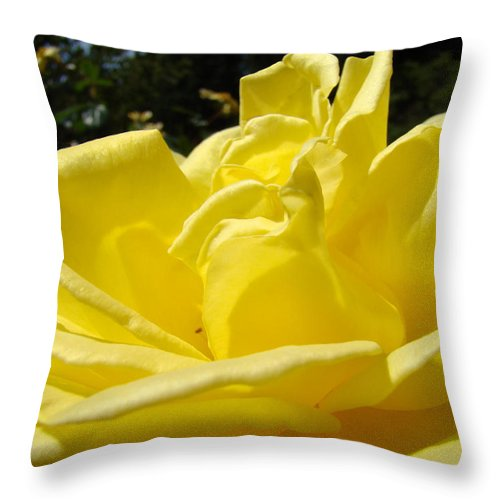 Rose Throw Pillow featuring the photograph Yellow Rose Sunny Art Prints Roses Flowers Baslee Troutman by Baslee Troutman