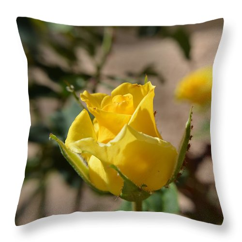 Rose Throw Pillow featuring the photograph Yellow Rose With Ants by Aimee L Maher ALM GALLERY