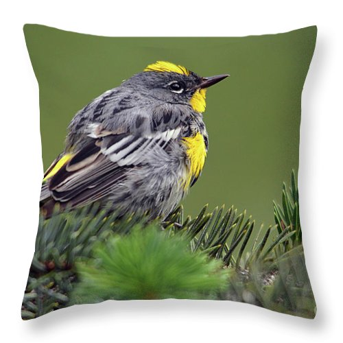 Deanna Cagle Throw Pillow featuring the photograph Yellow-rumped Warbler by Deanna Cagle