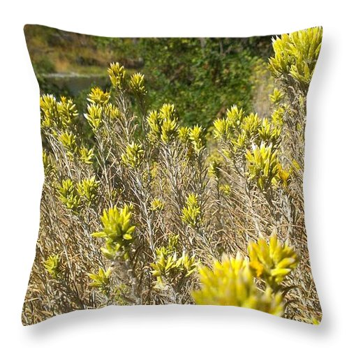 Yellow Sage Flower Throw Pillow featuring the photograph Yellow Sage Flower by LKB Art and Photography