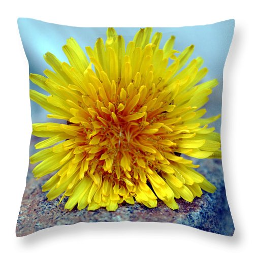 Flower Wild Nature Yellow Rock Blue Spring Macro Close Up Throw Pillow featuring the photograph Yellow Spring by Linda Sannuti