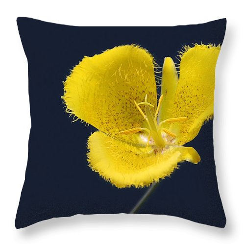 Flower Throw Pillow featuring the photograph Yellow Star Tulip - Calochortus Monophyllus by Christine Till